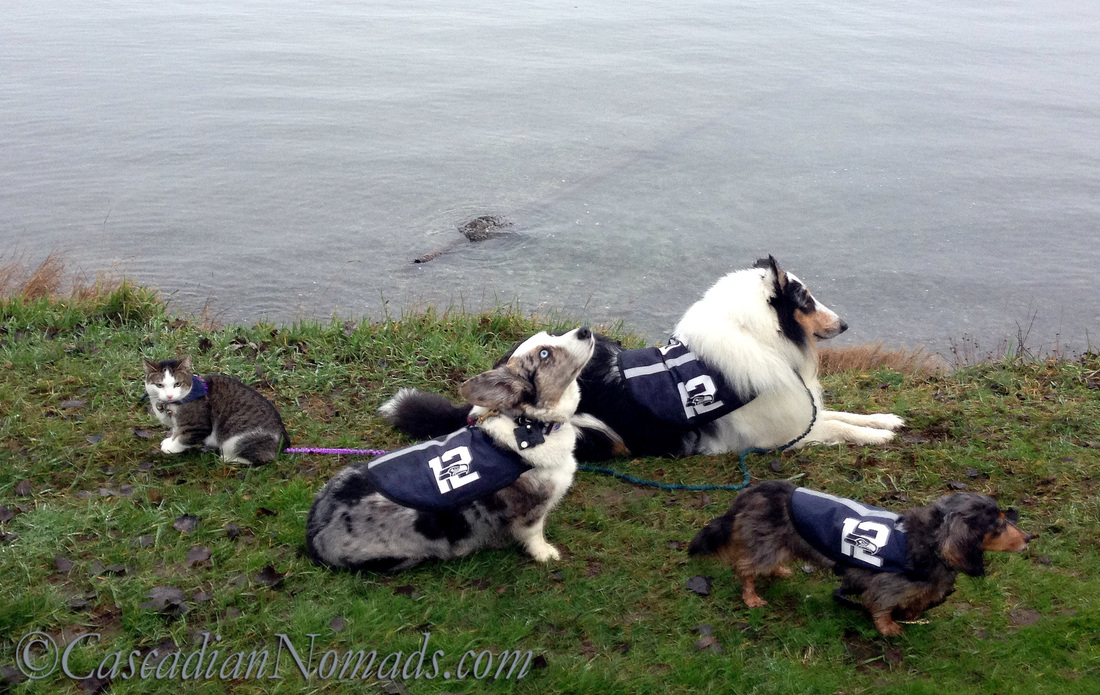A cat and three dogs chilling on the shore during a neighborhood walk: Responsible Pet Owners Month means accepting responsiblity for pet behavior, good and bad.