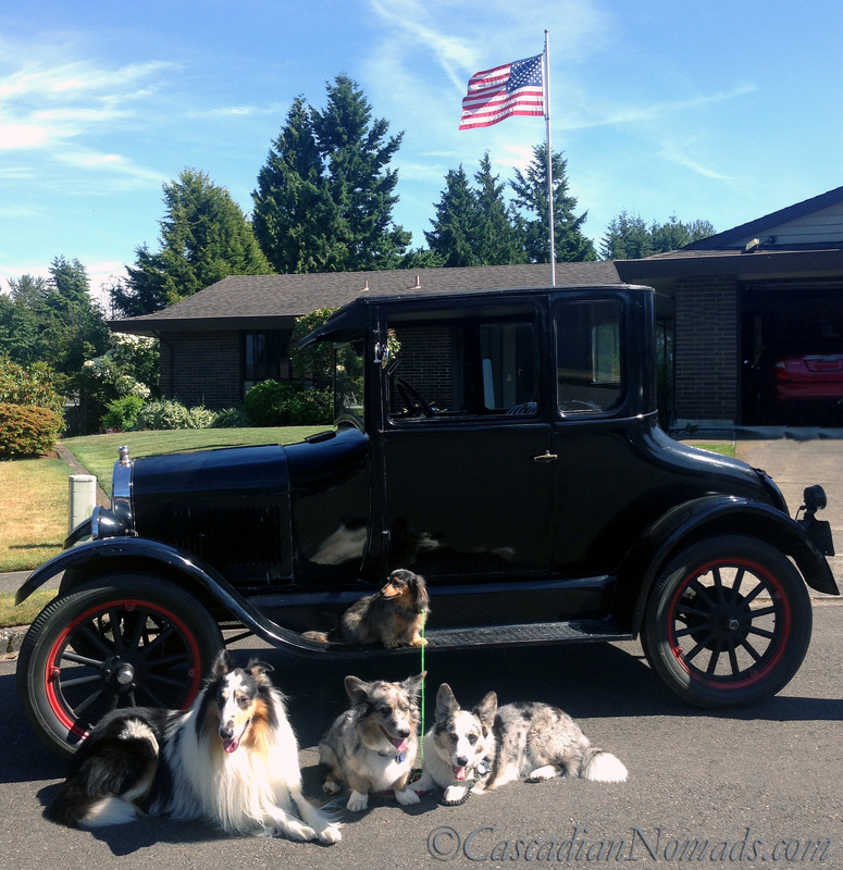 Four dogs and a 1924 Model T