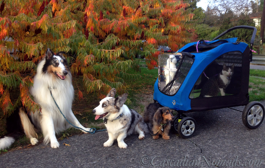 Beautiful but dangerous fall fit dog time: The Fall Seasons Obstacle Course Of Fit Dog Dangers