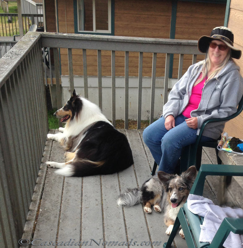Deck time for a rough collie and cardigan welsh corgi.