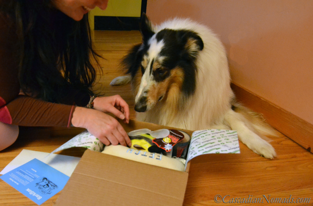 A Human, A Dog, A Box & Special Time Together: Human-Canine Bond Enrichment On #BarkBoxDay