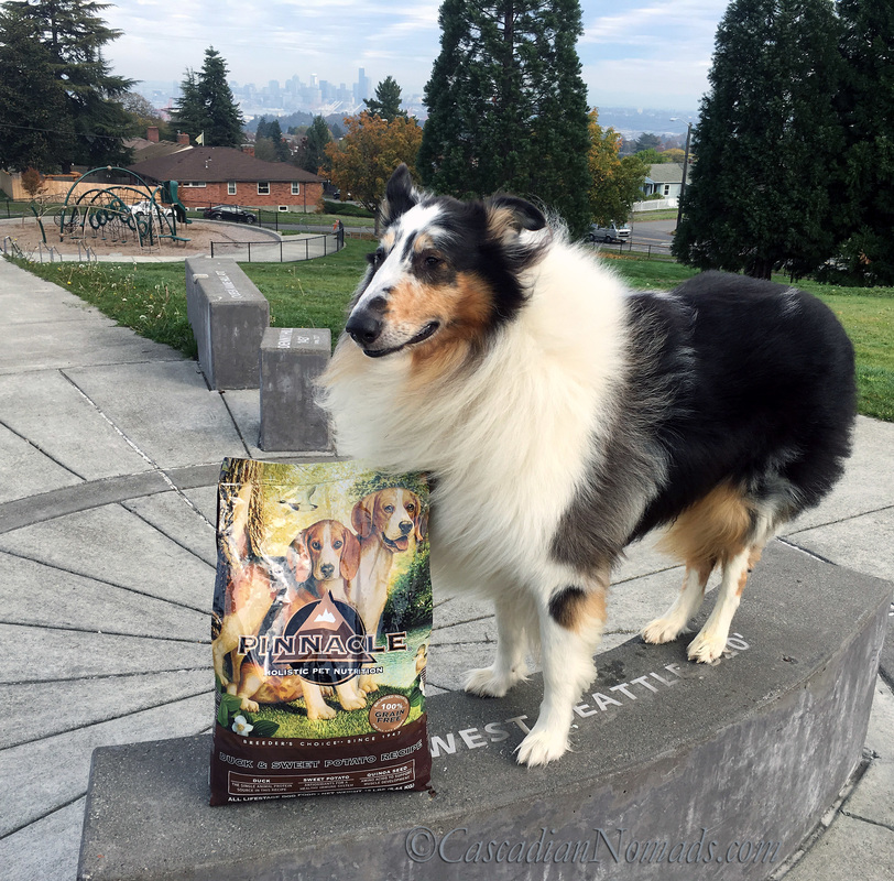Autumn Wind In His Fur: Rough Collie Huxley's Meal At The Peak of Seattle With #PinnacleHealthyPets