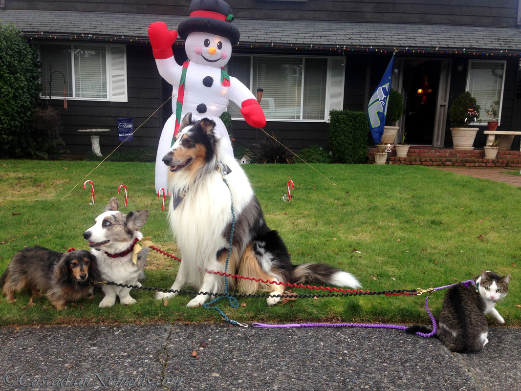 Three dogs and a cat pose for a picture with an inflated holiday snowman.