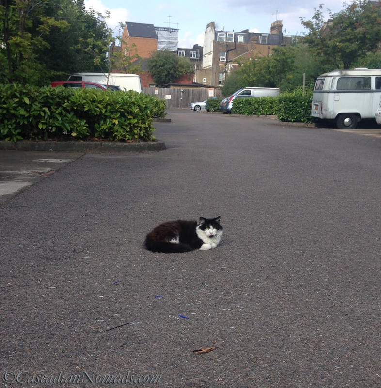 A cat rests in a quiet cul-de-sac, Holloway, London, England, United Kingdom.
