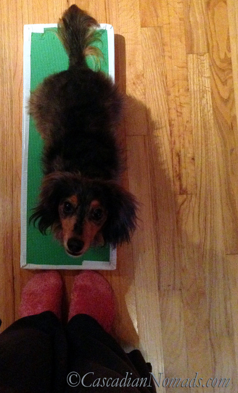 In Position For Fun: Affordable DIY Dog Training Platforms | Positive Pet Training Blog Hop