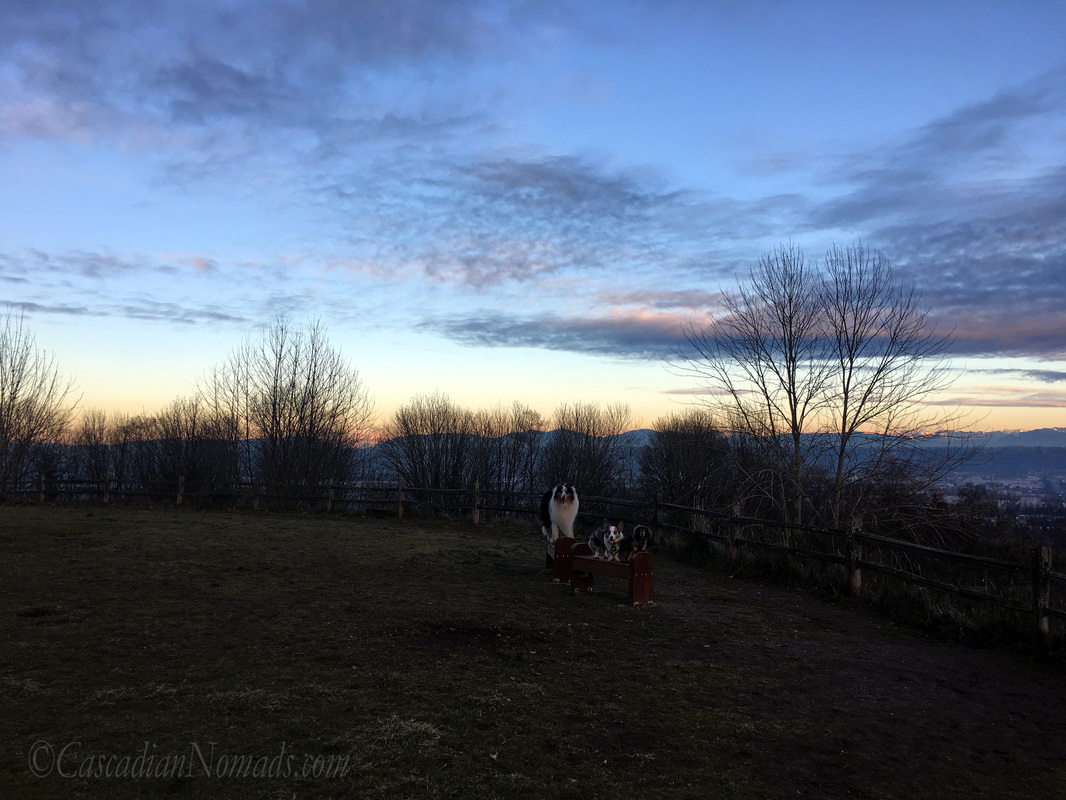 The grand view at dusk, Grandview Off-Leash Dog Park, SeaTac, Washington, Cascadia with miniature dachshund Wilhelm, Cardgian Welsh corgi Brychwyn and rough collie Huxley #DogwoodWeek2