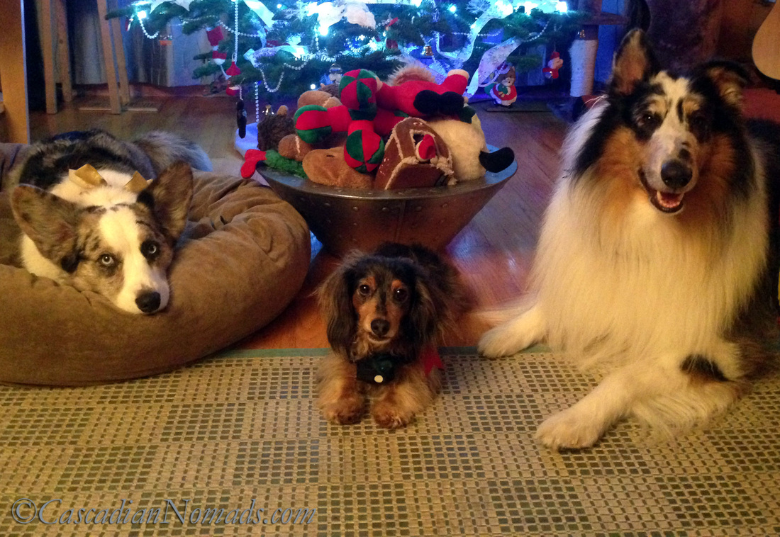 Three dogs and their overflowing basket of Christmas toys.
