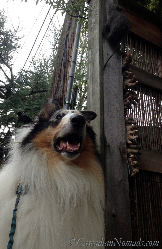 Fearless In Seattle: Changing How Dogs Feel About Something Scary