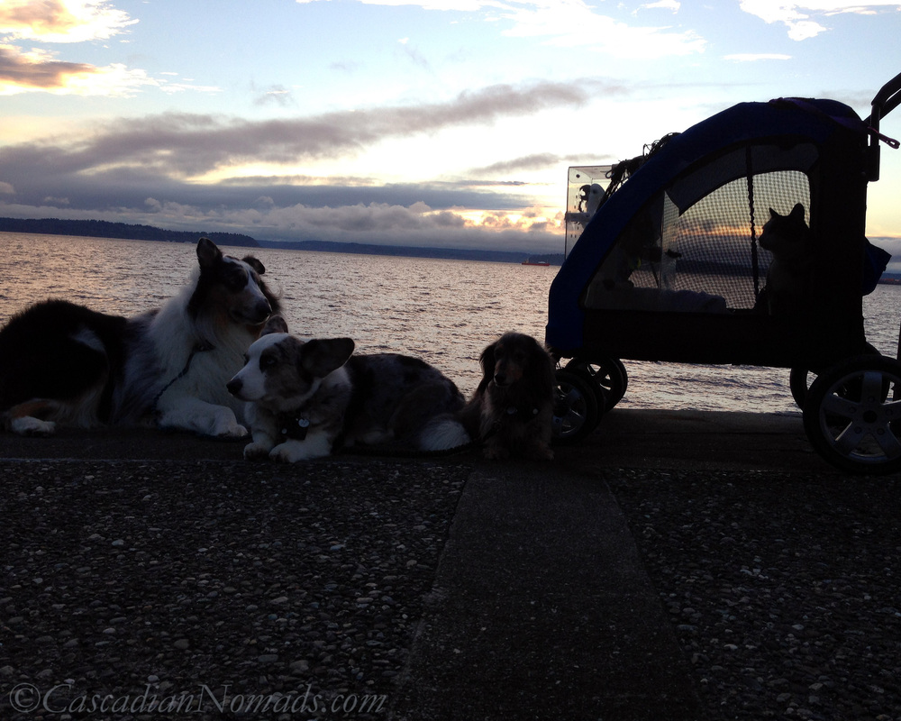 The Cascadian Nomads out for a winter sunset adventure to cheer each other up