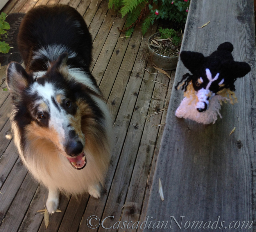 Cascadian Nomads rough collie, Huxley, with his crocheted mini