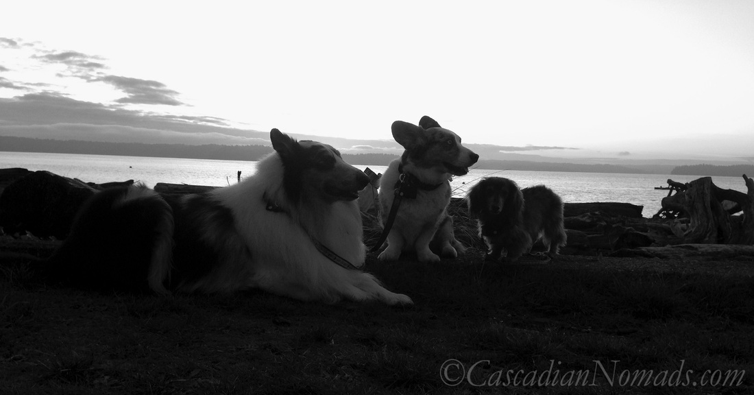 A Beautiful Black & White Photograph of Three Dogs & Puget Sound at Sunset