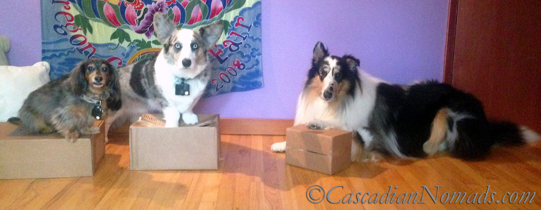Best Dog Training Tool: A Cardboard Box