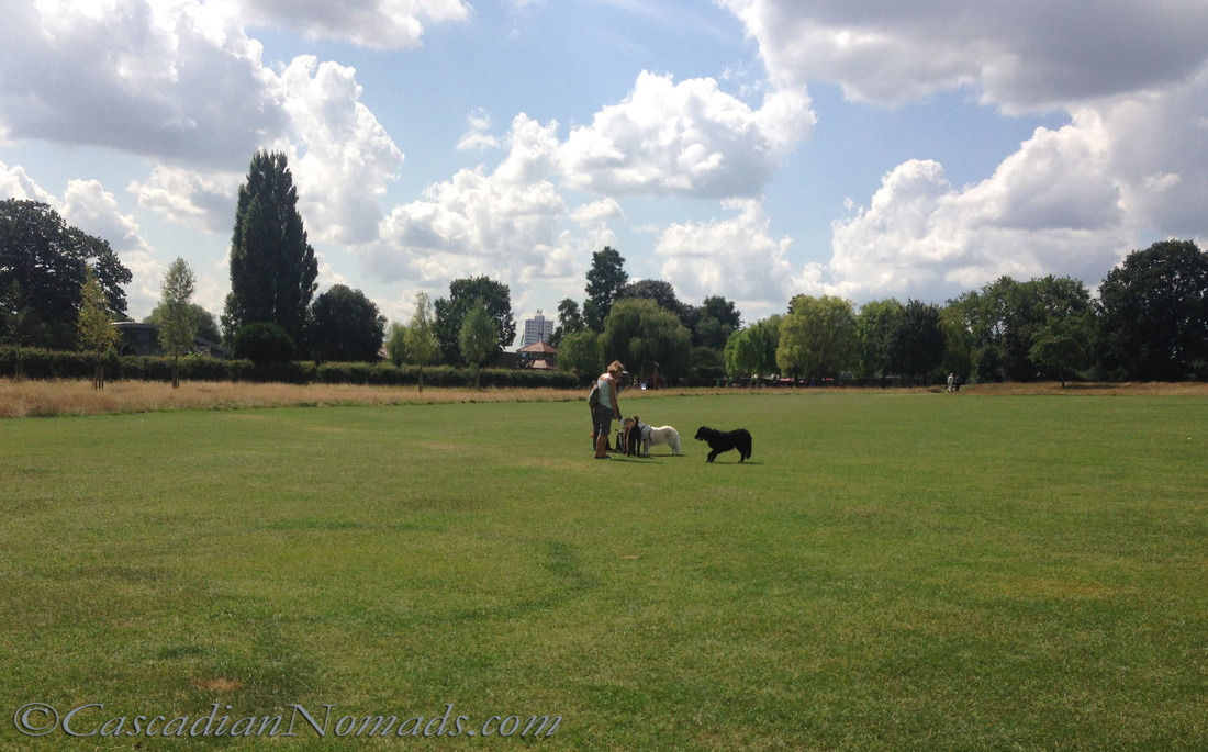 Dogs in a London park.