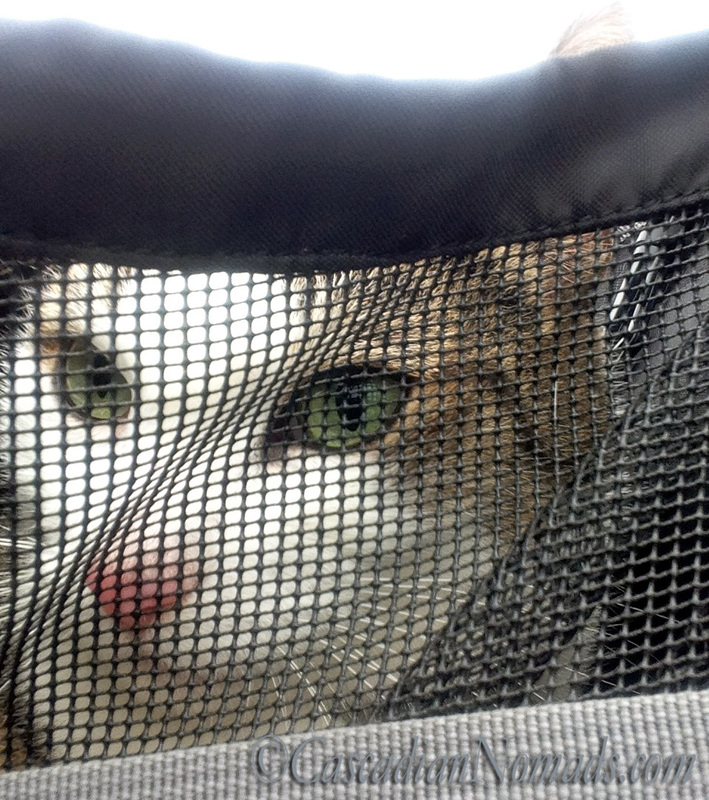 Cat Selfie: Amelia spies through the mesh of her front pack.