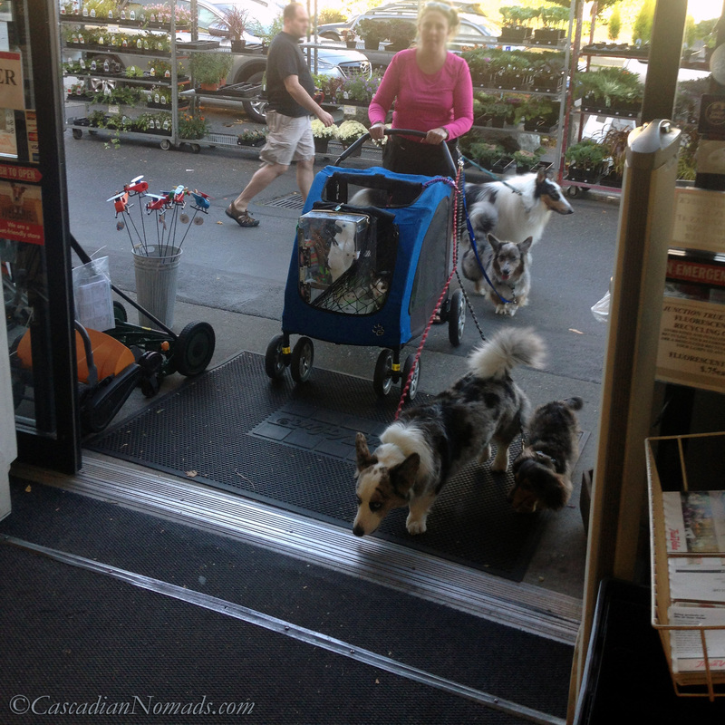 Living green with pets: walking instead of driving to do errands.