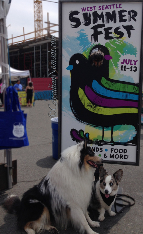 Cascadian Nomads Canines at West Seattle Summer Fest- Wilhelm looks down.