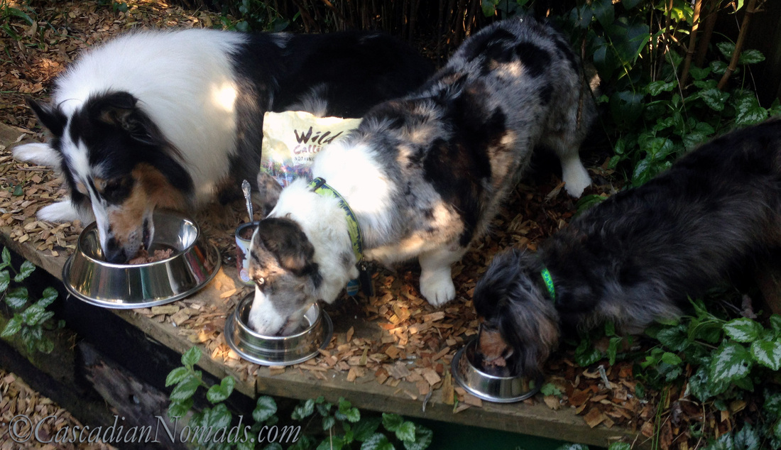 Three dogs eating a WildCalling! dog food meal in the great outdooors #TheArtofNutriton