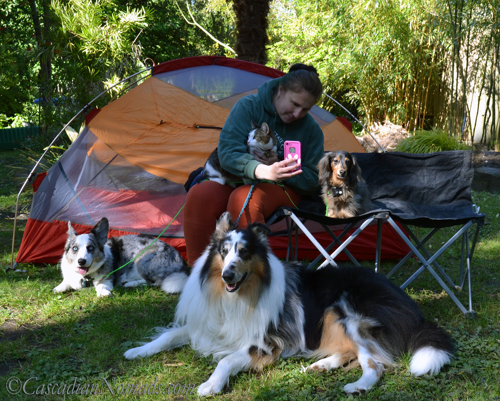 Camping With Dogs: Is Tearing Down Camp To Find A Vet Necessary? #VetOnDemand App Review