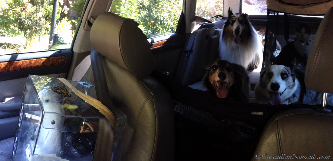 The Cascadian Nomads traveling pets.