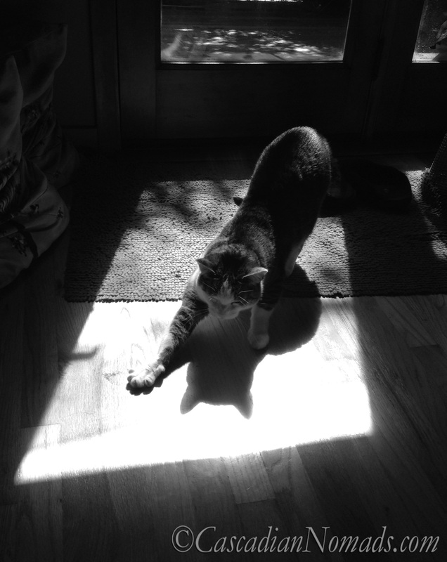 Black & White Photograph of Cat In Sunshine